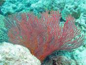 Soft Corals (Order Alcyonacea) - The Fish Market