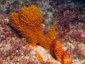 Sponges (PORIFERA) - Big Seal GNS Gutters